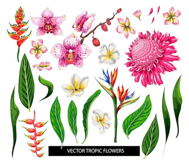 Conjunto de flores tropicales diseñar elementos aislados.
