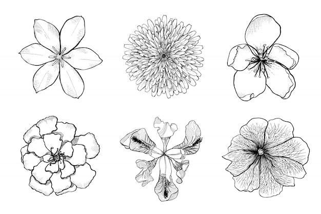 Conjunto de flores de vector dibujado a mano blanco y negro.