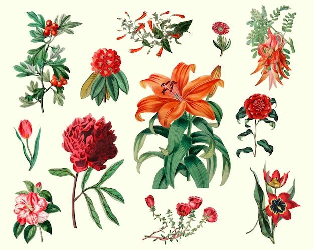 Conjunto de flores de la vendimia