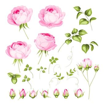 Conjunto de flores vintage.