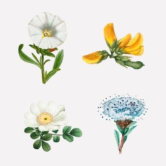 Conjunto de flores vintage