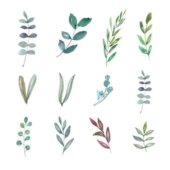 Conjunto de follaje de acuarela, ilustración dibujada a mano de elementos aislados