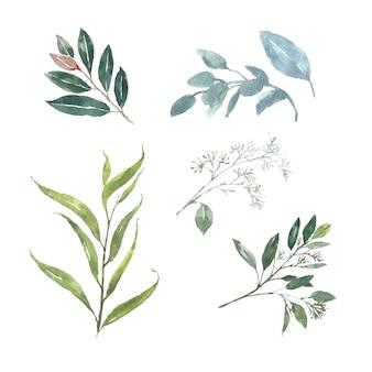 Conjunto de follaje de acuarela, ilustración de elementos aislados en blanco.