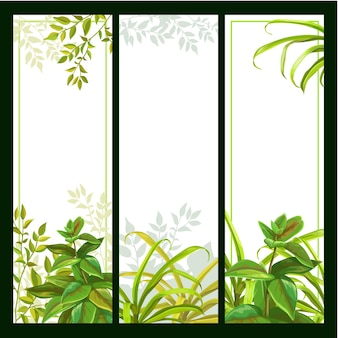 Conjunto de fondo de banner con plantas tropicales.
