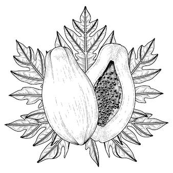Conjunto de fruta de papaya elementos dibujados a mano ilustración botánica