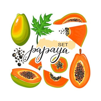 Conjunto de fruta de papaya, hojas, rebanadas de papaya y letras modernas.