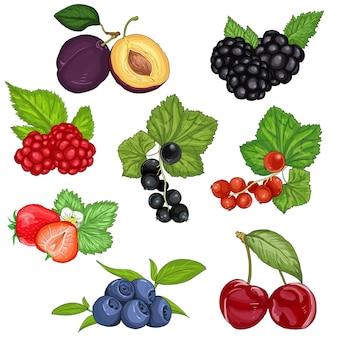 Conjunto de frutas y bayas silvestres