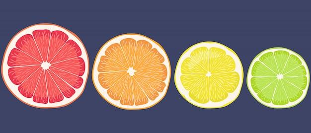 Conjunto de frutas cítricas. limón, lima, naranja y pomelo en estilo de dibujos animados.