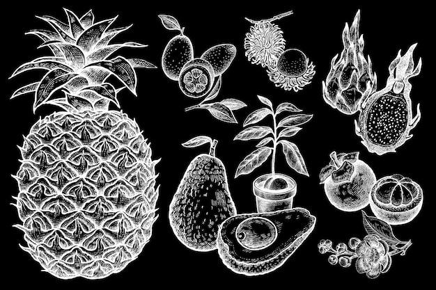 Conjunto de frutas exóticas al estilo de estampados vintage. tiza blanca sobre pizarra