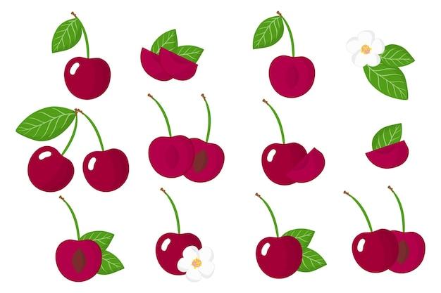 Conjunto de frutas exóticas de cerezas aislado en blanco