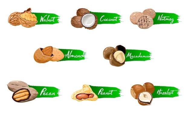 Conjunto de frutos secos y semillas de iconos con nombre.