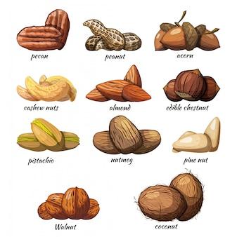 Conjunto de frutos secos sobre un fondo blanco