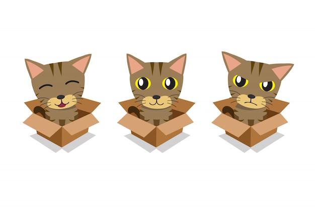 Conjunto de gato atigrado en caja de cartón