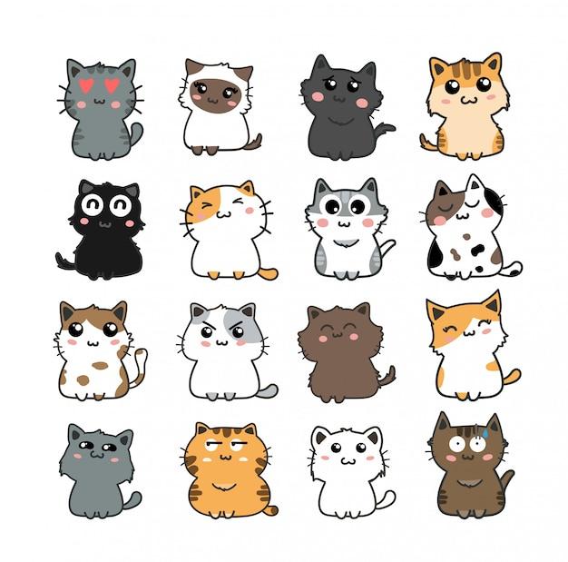 Conjunto de gato lindo