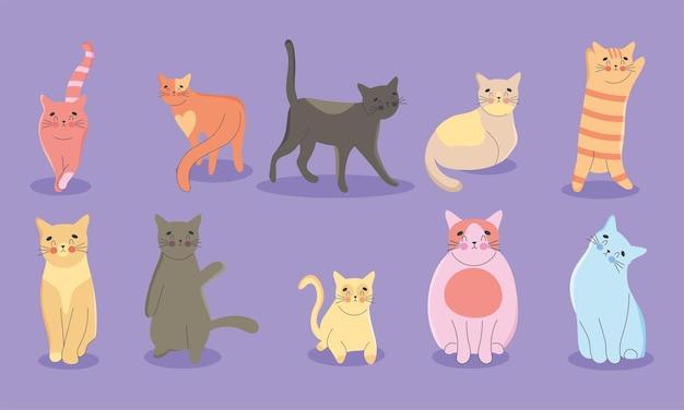 Conjunto de gatos adorables