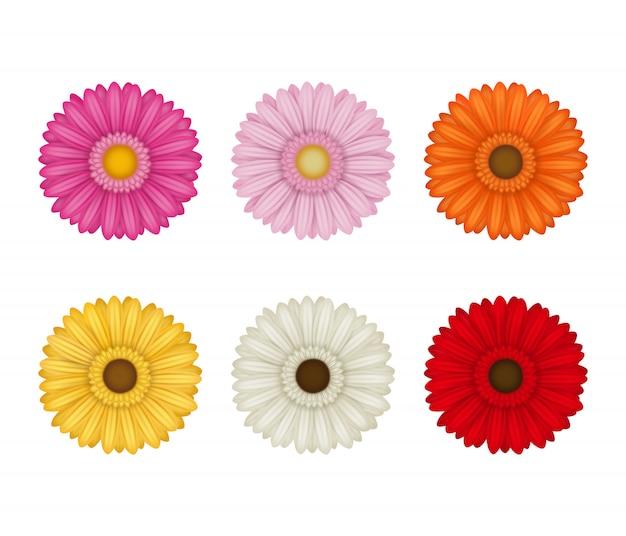 Conjunto de gerberas coloridas