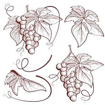 Conjunto gráfico de 6 racimos de uvas y elementos de vid.