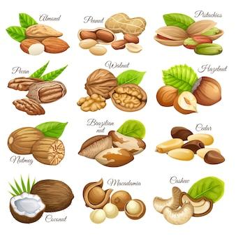 Conjunto de granos alimenticios nueces.