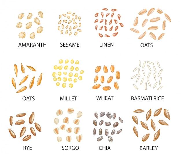 Conjunto de granos de cereal de color dibujados a mano.