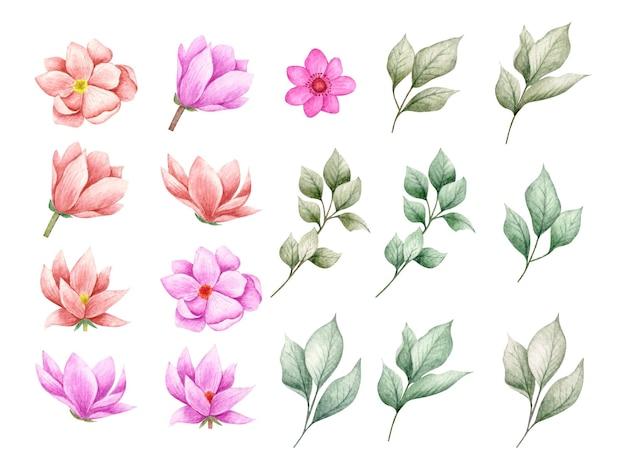 Conjunto de hermosas flores y ramas de hojas para tarjetas de felicitación