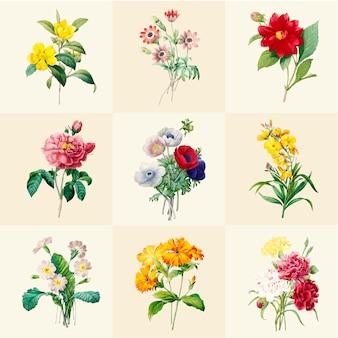 Conjunto de hermosas flores silvestres en flor