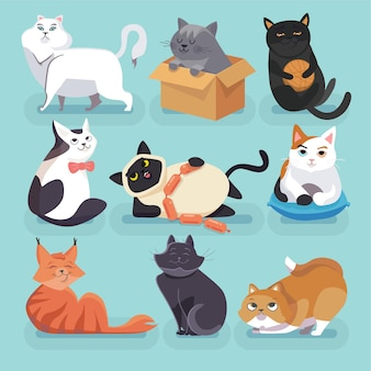 Conjunto de hermosos gatos de dibujos animados de moda de colores. diferentes razas.