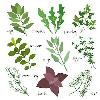 Conjunto de hierbas curativas, medicinales y fragantes.