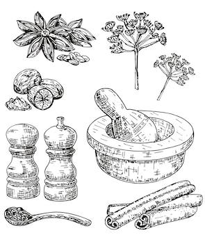 Conjunto de hierbas y especias culinarias dibujadas a mano de tinta