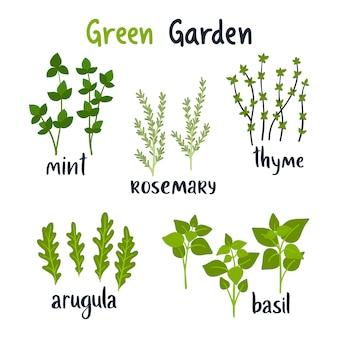 Conjunto de hierbas de ilustración vectorial con letras.
