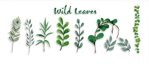 Conjunto de hojas botánicas y silvestres en acuarela