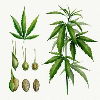 Conjunto de hojas de cannabis botánico