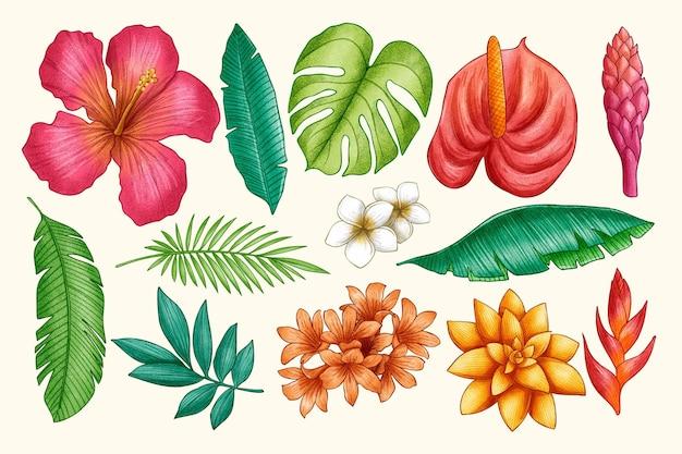 Conjunto de hojas y flores tropicales dibujadas a mano
