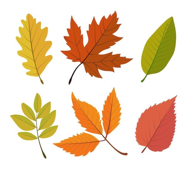 Conjunto de hojas de ilustración floral de otoño