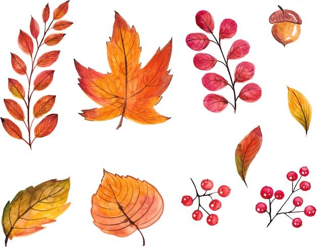 Conjunto de hojas de otoño acuarela pintada a mano, aislado sobre fondo blanco. lo mejor para halloween, invitaciones de diseño del día de acción de gracias.