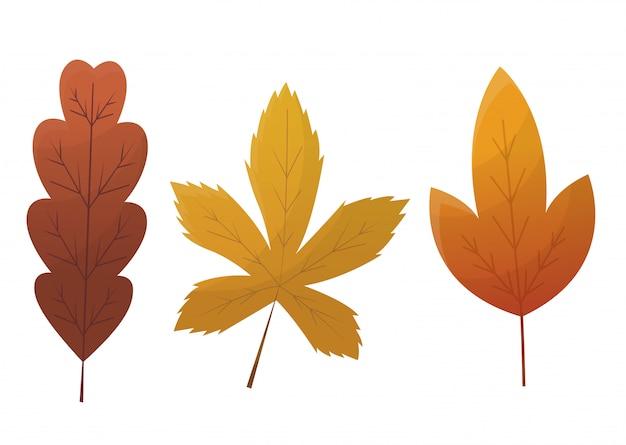 Conjunto de hojas de otoño aislado en blanco
