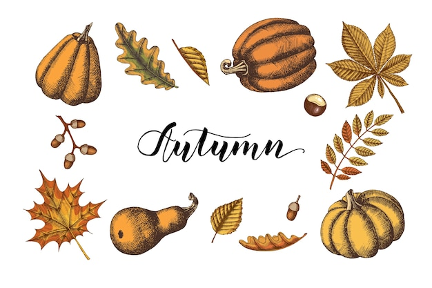 Conjunto de hojas de otoño y calabazas. dibujado a mano de color arce, abedul, castaño, bellota, fresno, roble. bosquejo. clásico. ilustración de grabado.