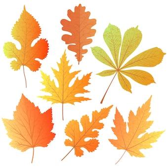 Un conjunto de hojas de otoño. elemento de decoración para saludos al maestro, día de acción de gracias, oktoberfest