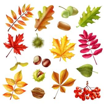 Conjunto de hojas de otoño