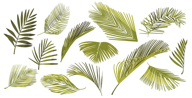 Conjunto de hojas de palma de coco aislado sobre fondo blanco. elementos gráficos de follaje de plantas tropicales, ramas verdes de palma