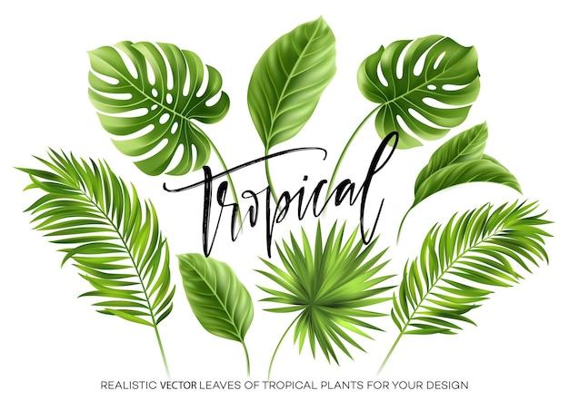 Conjunto de hojas de palmeras tropicales aisladas sobre fondo blanco.