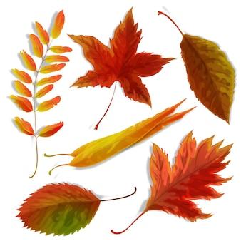 Conjunto de hojas realistas