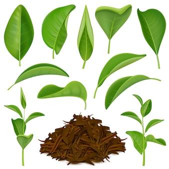 Conjunto de hojas de té realista