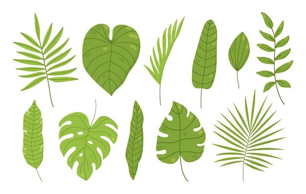 Conjunto de hojas tropicales aisladas en blanco