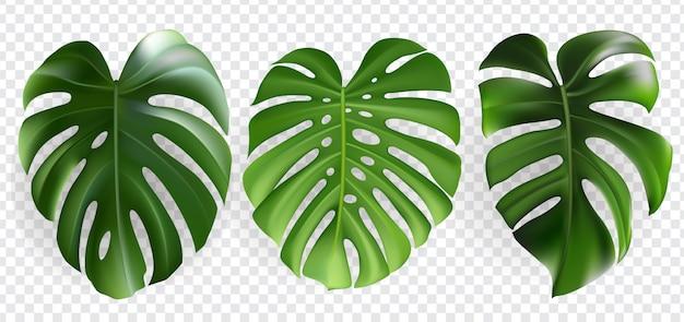 Conjunto de hojas tropicales aislado
