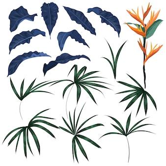 Conjunto de hojas tropicales y vector de plantas exóticas.