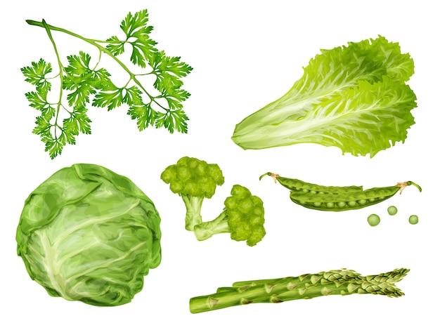 Conjunto de hortalizas verdes