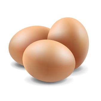 Conjunto de huevos aislados