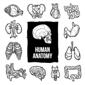 Conjunto de iconos de anatomía