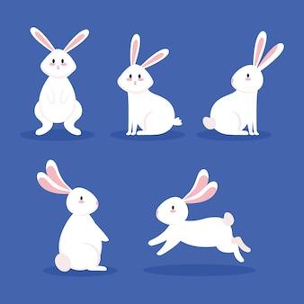 Conjunto de iconos de animales conejos