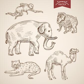 Conjunto de iconos de animales divertidos amigable zoológico de vida salvaje.
